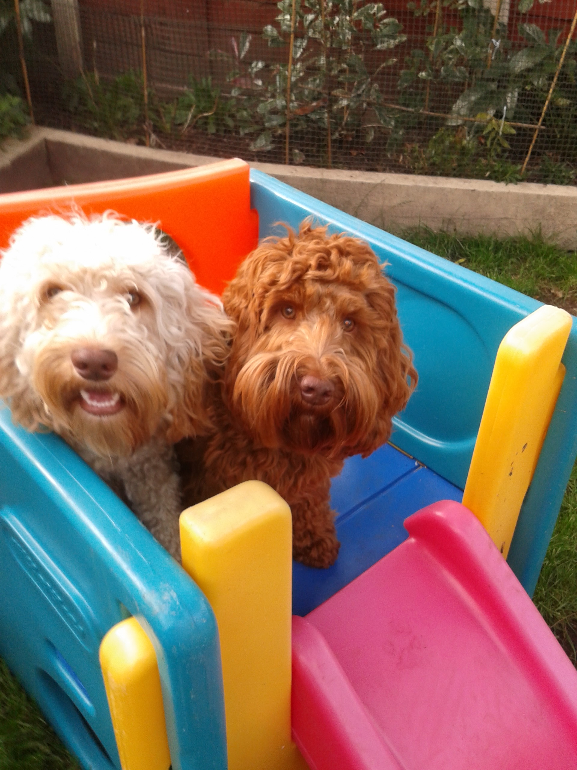 Bowsers dog boarding walking services for Dog boarding places near me