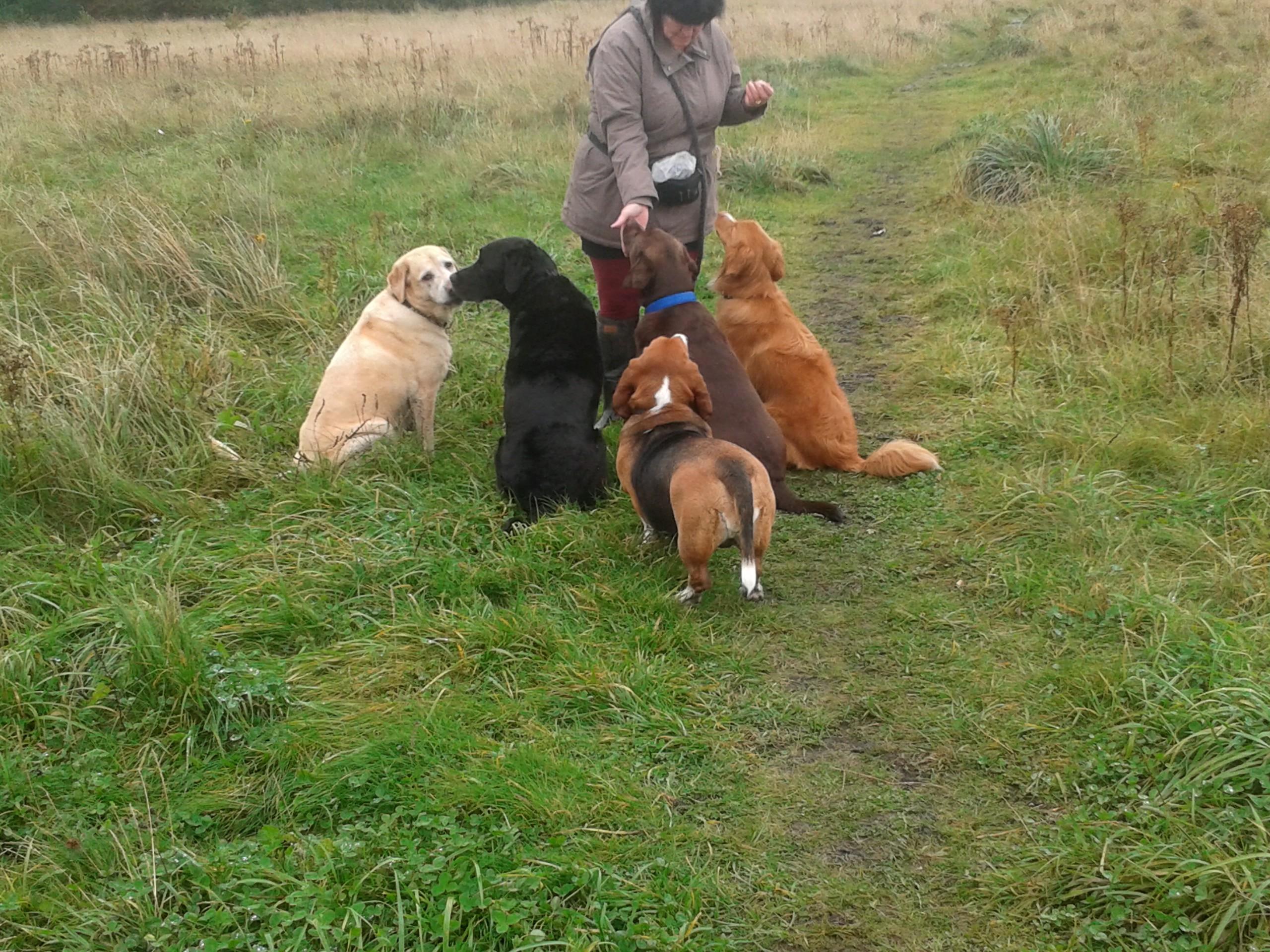 Alfie Dog Walking